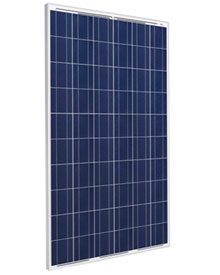 Polycrystalline module 250wp Q CELL 250 Wp