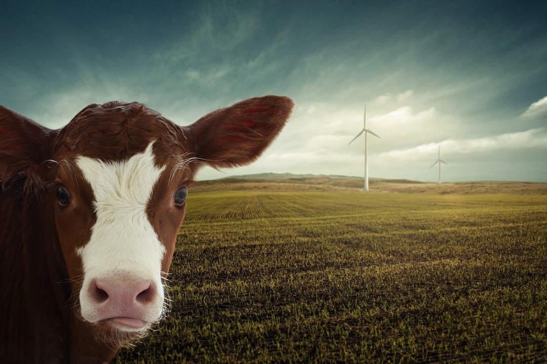 Hoy es el día mundial del ahorro de energía